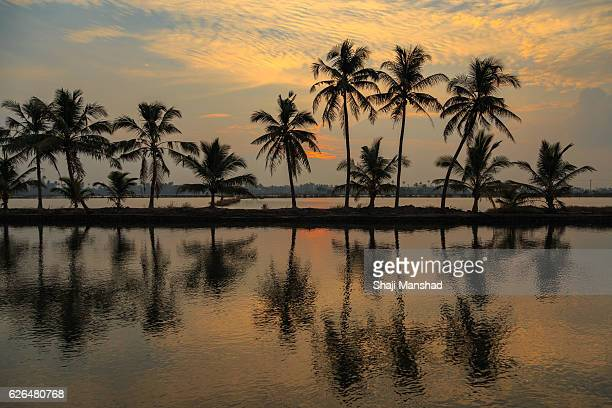 Coconut trees reflecting in the water during sunrise