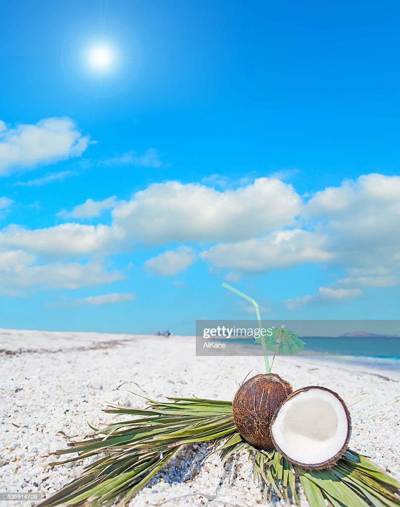 coconuts and palm branches under the sun : Stock Photo