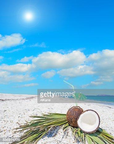coconuts y las ramas bajo el sol : Foto de stock