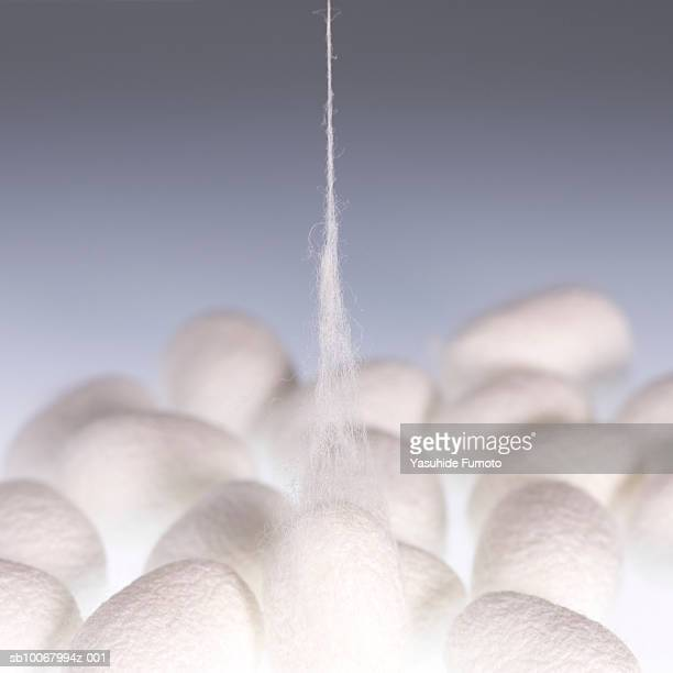 Cocoons on white background
