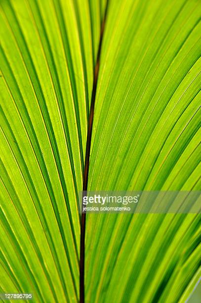 Cocount leaf