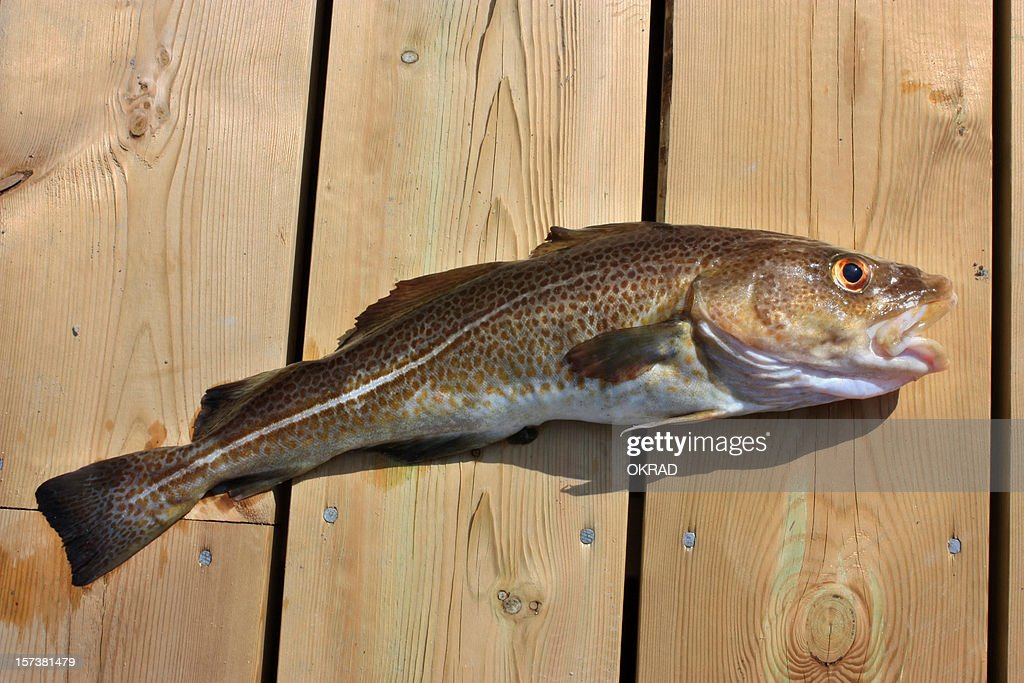 Cod on Wooden Dock