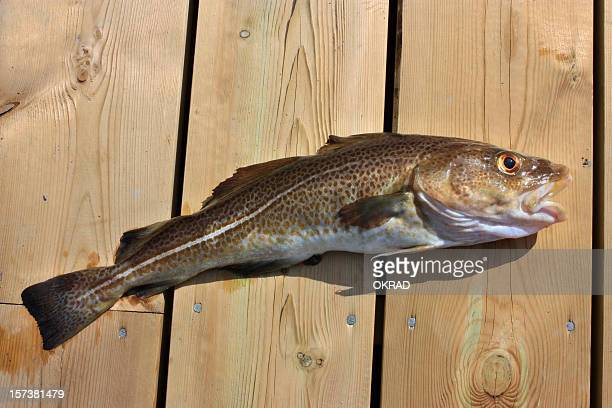 Cod on Wooden Dock