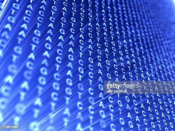 code de l'ADN