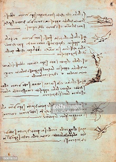 Codex on the flight of birds by Leonardo da Vinci drawing folio 8 recto