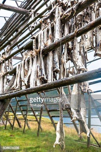 Codfish hanging in Norway : Stock Photo