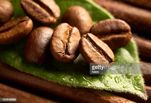 Coffee beans and wet leaf