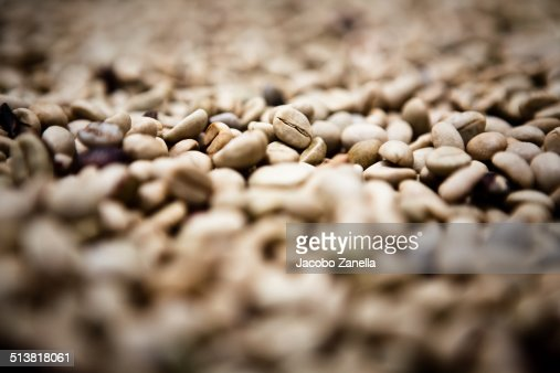 Coffee beans being sun dried
