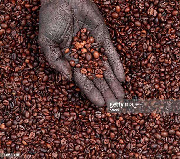 Coffee Beans in Human Hand