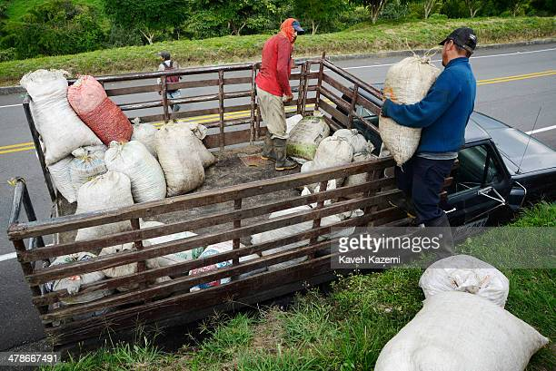 Coffee pickers load the day's picked coffee beans packed in large bags on to a pickup truck parked by the roadside in front of a plantation on...