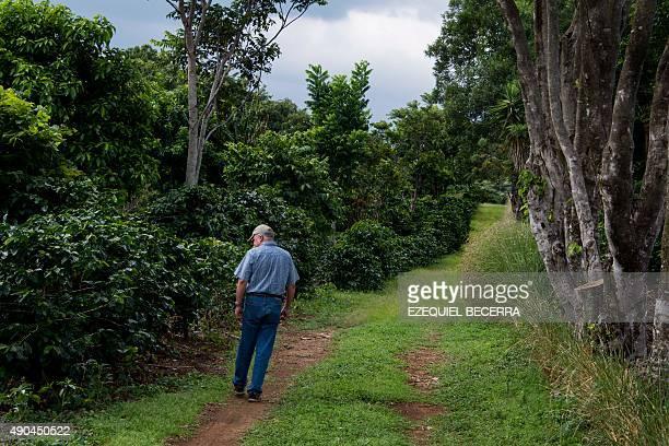 Coffee producer Adrian Hernandez inspects plants at his farm Altamira in Barva Heredia Heredia 17 km north of San Jose on August 25 2015 Hernandez...