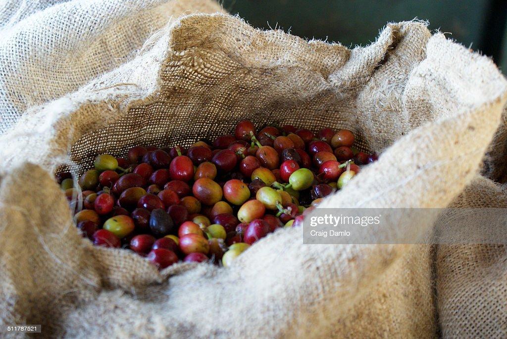 Coffee sack : Stock Photo