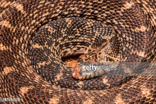 Serpiente enrollado : Foto de stock