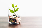 Coins in a bottle and the green tree, Represents the financial growth. The more money you save, the more you will get.
