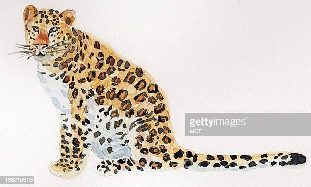 3 col x 35 in / 146x89 mm / 497x302 pixels EeliEthel Polli color illustration of a leopard
