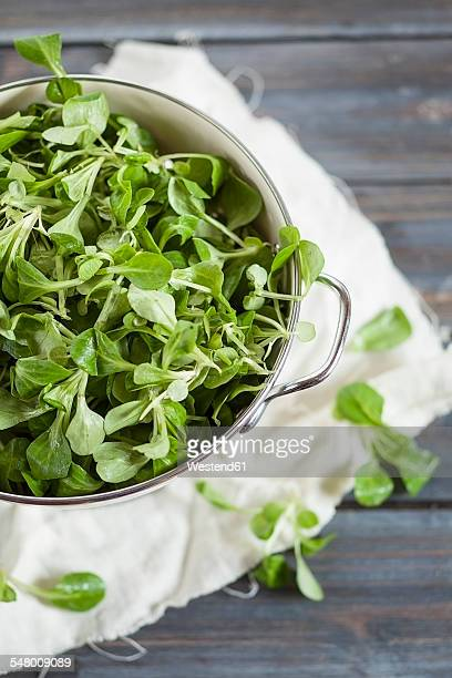 Colander of lambs lettuce, Valerianella locusta, on grey wood