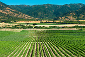 Panoramic view of a vineyard at Colchagua valley, Chile