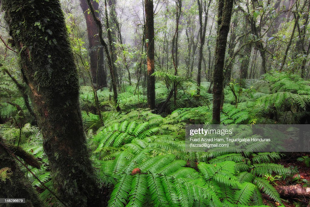 Cold rain forest