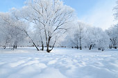 Natural landscape in the Park.On the ground and in the trees is a lot of snow.Beautiful and cold winter.