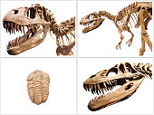 Collage composition of dinosaurs skeletons on white isolated background.