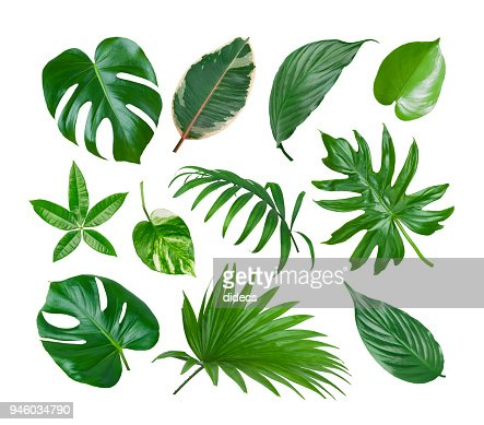 Collage of exotic plant green leaves isolated on white background : Stock Photo