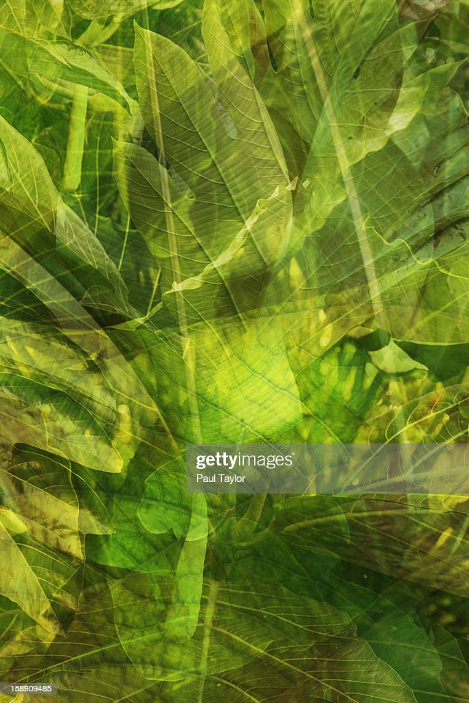Collage of Tropical Plants : Stock Photo