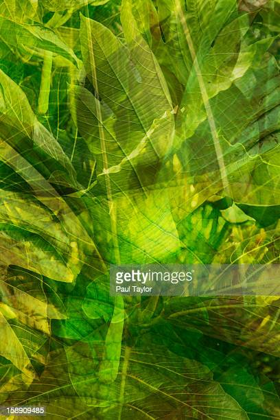 Collage of Tropical Plants