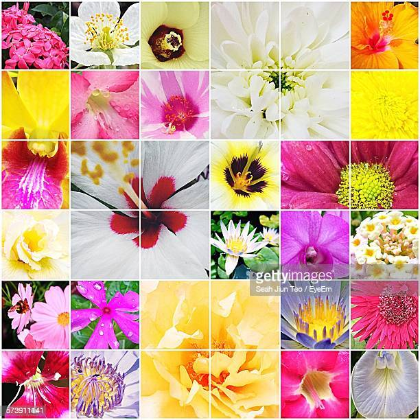 Collage Of Various Flowers Blooming Outdoors