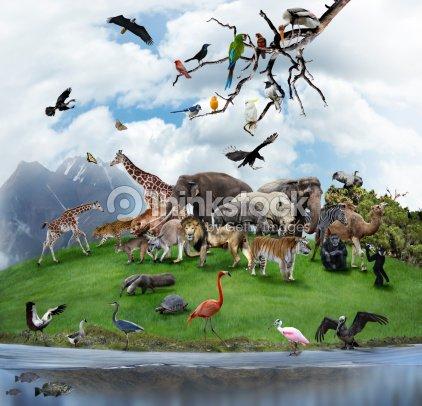 Collage Of Wild Animals And Birds