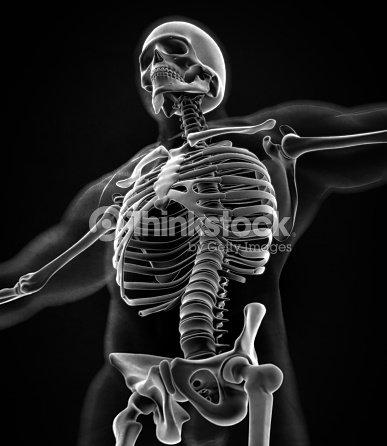 Kragen Knochen Xray Menschliche Anatomie Skelettsystems Torso Rippen ...