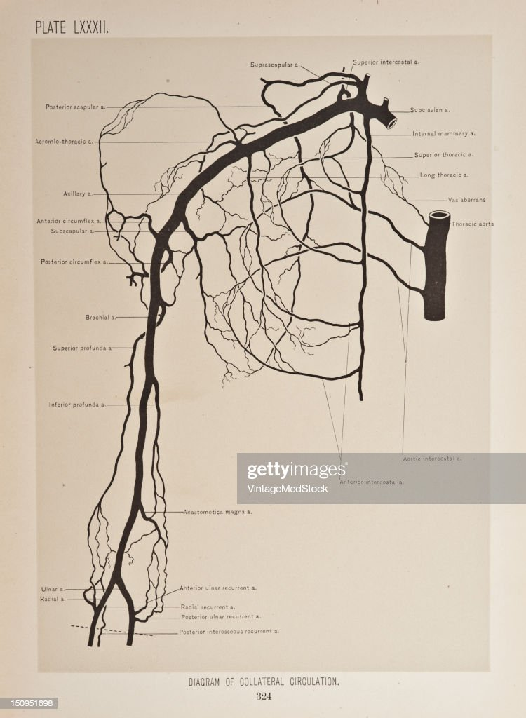 Collateral circulation is when an area of tissue or an organ has a number of different pathways for blood to reach it 1899 From 'The Treatise of the...
