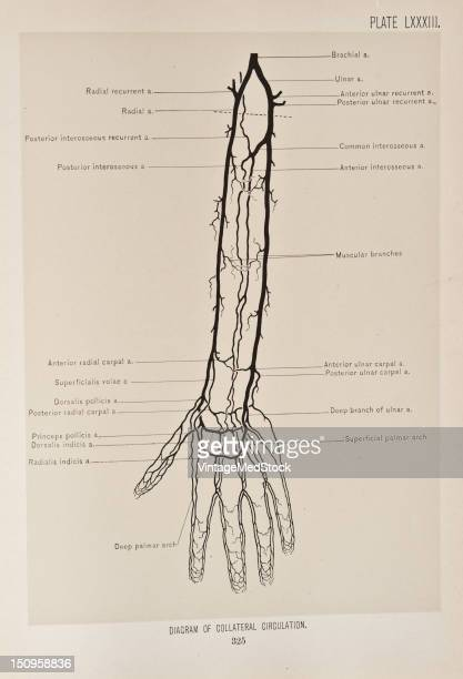 Medical Diagram Stock Photos Et Images De Collection