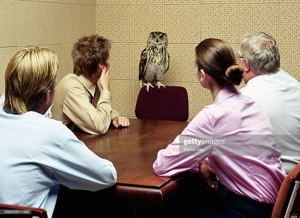 Colleagues looking at owl in meeting room (Digital Composite) : Stock Photo