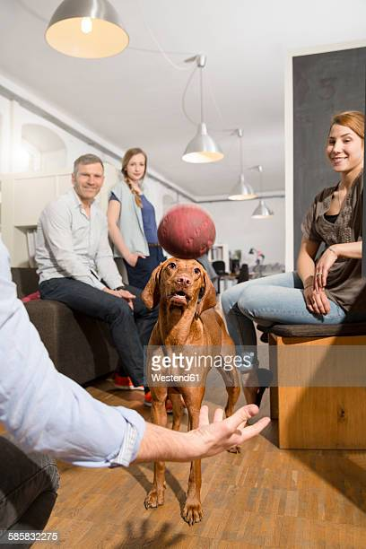 Colleagues playing with dog in office