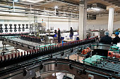 Colleagues working in the bottling plant at a wine factory