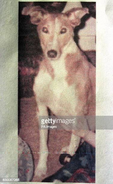 Collect picture of Jay the lurcher dog belonging to murder victim Linda Bryant who died in a pool of blood in a gateway yesterday while taking Jay...