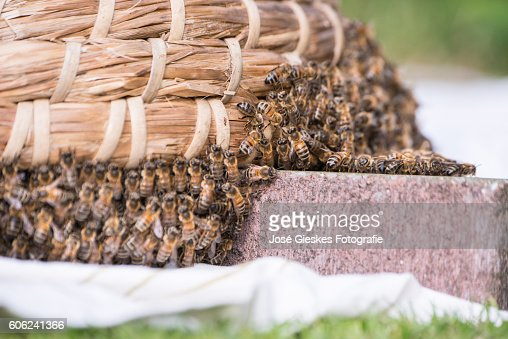 Collecting the bees in a hive