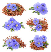 Collection of flax seeds with flowers close up on white.