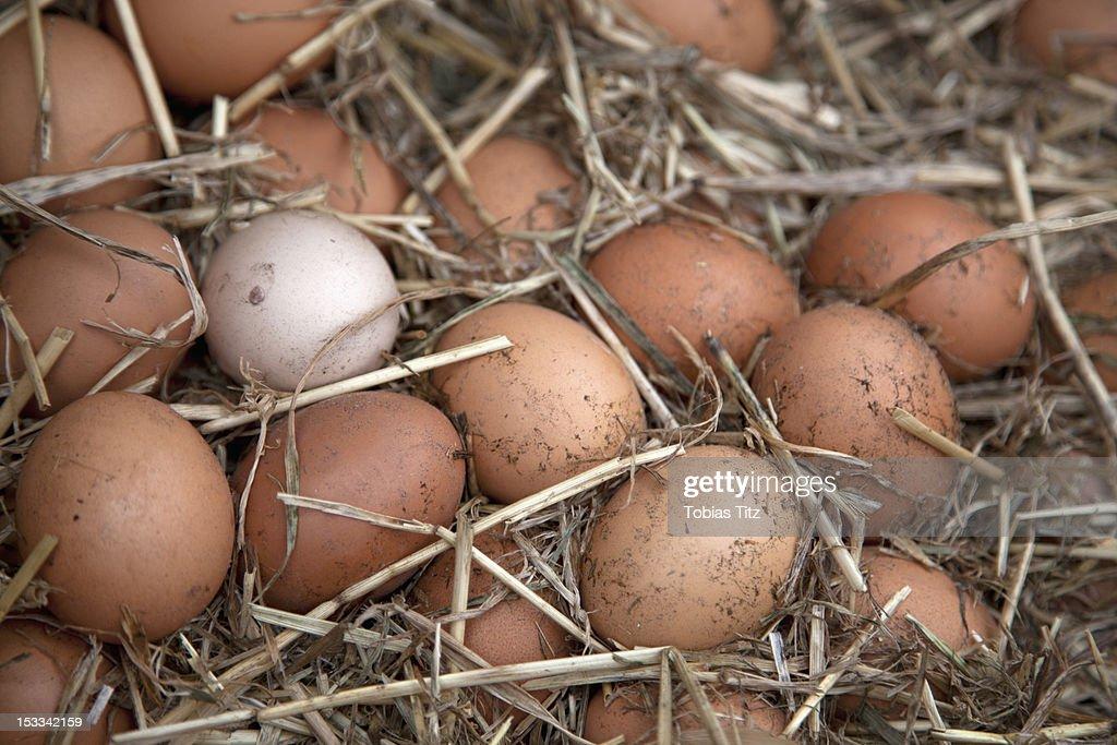 Collection of fresh farm eggs