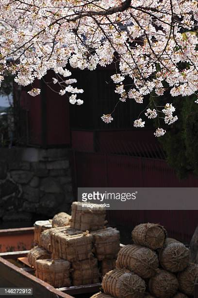 Collection of haystack with Cherry Blossom flowers