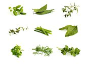 Collection of aromatic herbs - basil, bay leaves, winter savory, thyme, scallions, mint, parsley, dill and cilantro (coriander)