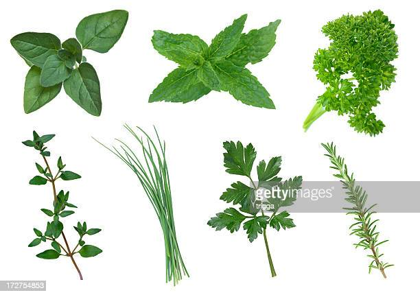 Collection of herbs