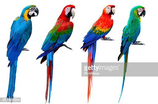 Collection of macaw birds, blue and gold, green-winged, scarlet : Stock Photo