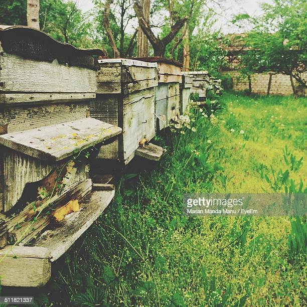 A collection of old bee hives in an outdoor garden