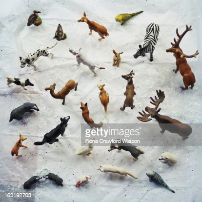 collection of small toy animals viewed from above