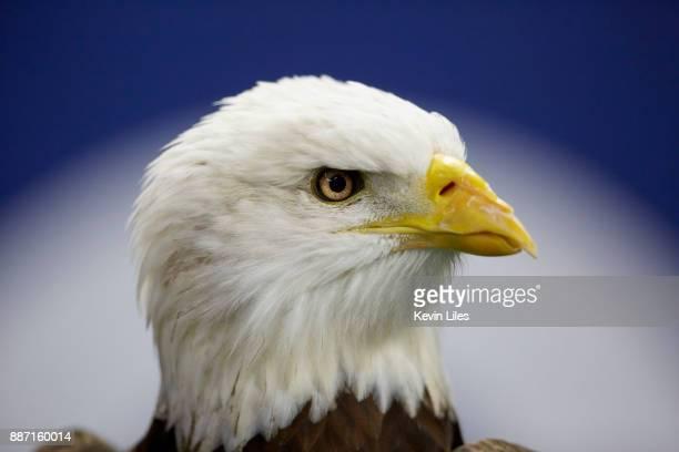 SEC Championship Closeup of bald eagle's head before Georgia vs Auburn game at MercedesBenz Stadium Atlanta GA CREDIT Kevin Liles