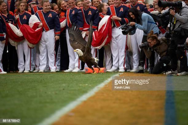 View of bald eagle landing on field after anthem before Auburn vs Alabama game at JordanHare Stadium Auburn AL CREDIT Kevin Liles