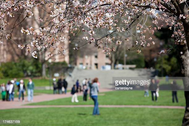College Students on the UW Campus, with cherry blossoms