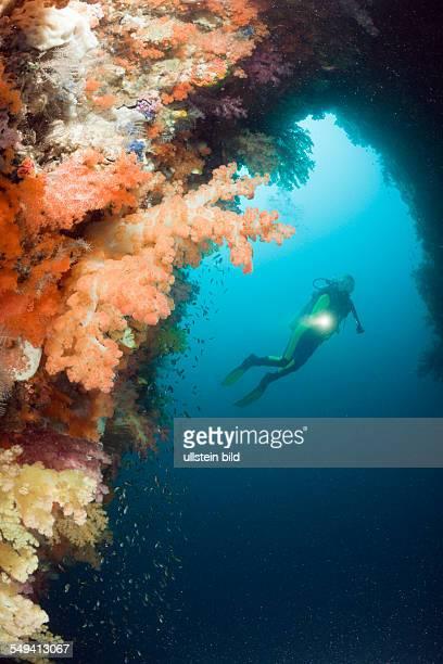 Coloful Corals in Grotto Raja Ampat West Papua Indonesia