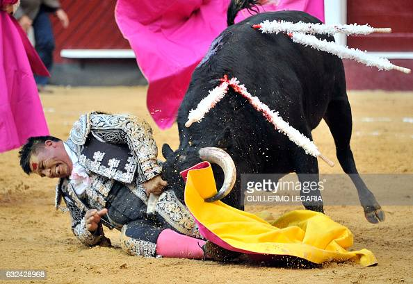 Colombian banderillero is hit by a bull during a bullfight at the Santamaria bullring in downtown Bogota Colombia on January 22 2017 The historic...